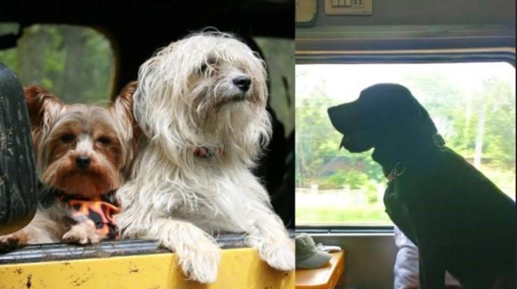 Que animais podem viajar de trem?